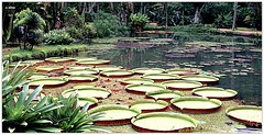 Jardim Botnico (o.dirce) Tags: lago plantas vegetao tropicalvegetation vitoriargia odirce nature natureza jardimbotnico riodejaneiro brasil