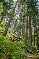 Just Nature (Elisa.95) Tags: nature trees show shot pathway mountain sky perspective green land nikon italy landscape explored wow trentino rabbi