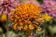 En un jardn monegrino (Egg2704) Tags: flor flores naturaleza naturalia jarcn jarcines egg2704