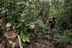 Guilherme.Gnipper-0150 (guilherme gnipper) Tags: picodaneblina yaripo yanomami expedio expedition cume montanha mountain wild rainforest amazonas amazonia amazon brazil indigenous indigena people