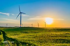 DSC_2125 (Jeffery A. Smith) Tags: bottineau northdakota nikond3300 nikon windtower wind renewable sunset field windfarm electric electricity windpower turbine windmill