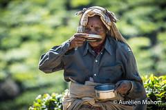 inde_2801143668.jpg (aurelien.mahot) Tags: indedusud inde munnar tea kerala plantations france