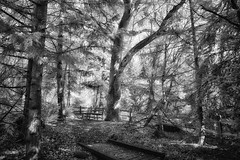 Forest Path (zenseas : )) Tags: forest woods wooded tree trees path walking walkway monochrome bw blackandwhite ir infrared digitalinfrared wpz woodlandparkzoo seattle washington