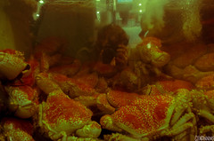 Crabs and I (smellerbee) Tags: sydney australia holiday vacation selfportrait reflection green orange crabs seafood crustacean pentax pentaxkr digital colour indoors indoor color water lunch