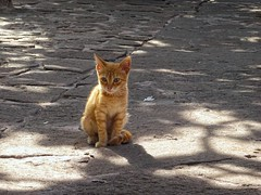 And a little love...! (panoskaralis) Tags: cats pets animals nature lesbos lesvosisland lesvos island mytilene greece greek hellas hellenic cute beauty aegean aegeansea outdoor animal