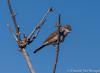 Grasmus (Chantal van Breugel) Tags: texel vogels grasmus de muy noordholland canon50d canon70300