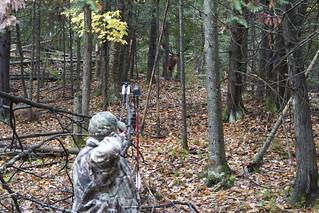 Quebec Elk & Red Stag Hunt 84