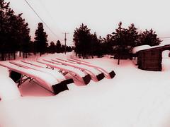 DSC00155 (gabriellakoritar) Tags: winter husky rest sled