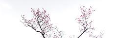 (Polotaro) Tags: panorama flower nature pen olympus   zuiko 3      mzuikodigital45mmf18 epm2