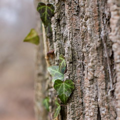 Nature walk (abysal_guardian) Tags: ex nature canon eos 50mm unitedstates pennsylvania f14 sigma dg havertown hsm sigma50mmf14exdghsm 7dmarkii 7dm2