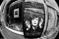 DAVID BOWIE HEROES: fotografie di Masayoshi Sukita (Sonia Golemme) Tags: mostra bologna heroes fotografia davidbowie sukita ono onoartecontemporanea masayoshisukita