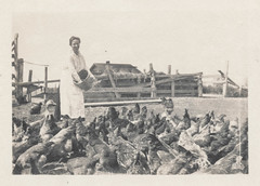Woman feeds her chickens and geese (simpleinsomnia) Tags: old woman white black chicken monochrome animals vintage found blackwhite antique farm snapshot goose photograph poultry vernacular foundphotograph