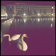 Swans @ Messesee (Casey Hugelfink) Tags: lake night munich pond swans messe fairtrade riem messesee