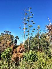 Hydro Garden (RobW_) Tags: africa blue sky march south sunday hydro western cape stellenbosch 2015 gardern lindida mar2015 22mar2015