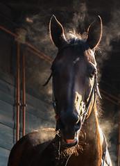 Caballo (jj_bose66) Tags: chile santiago naturaleza color animal club caballos nikon sombras hipica d7100