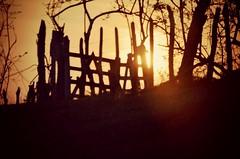 It's like a sunset in your eyes. (Mara Paula Montoya) Tags: trip trees sunset vacation black photography nikon colombia roadtrip cartagena nikond5100