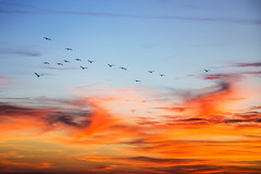 Heading into the flames (Kansas Poetry (Patrick)) Tags: birds kansas lawrencekansas jayhawks clintonlake patrickemerson patricklovesnancy