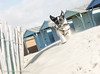 """Beach Huts and Nibbler: """"West Wittering Beach"""" """"West Sussex"""" (Mr Whites Paw Prints) Tags: westsussex beachhuts nibbler westwitteringbeach"""