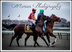 Secret Circle (EASY GOER) Tags: horse sports canon dubai racing 7d winner f4 thoroughbred equine 70200mm breederscup baffert