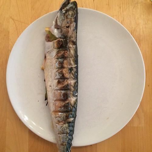 Fishy on a dishy.