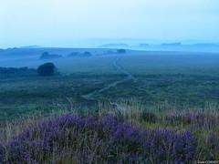 Landes Brasparts (yann_cornec) Tags: landscape bretagne paysage canonpowershots45 montsdarrée montsaintmicheldebrasparts
