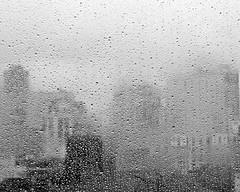 Rainy Day (gcohenphotography) Tags: street newyorkcity flowers blackandwhite storm rain explore brooklynbridge mellow