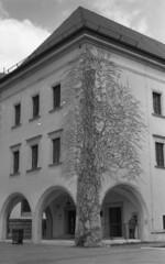 Wawel Castle (koko3d) Tags: wawel krakw cracow foma wawelcastle nikonem fomapan200