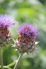 What's this plant ? (Ludo2937000) Tags: tours la gloriette jardin fleurs insectes