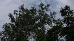 20160722_153443 (galaxyj5) Tags: santiniketantouristlodge santiniketan samsung samsunggalaxy nature trees