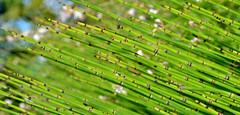 Se prendre une vole de pics verts, eh ben a fait mal ! :-) (Thierry.Vaye) Tags: vert pics plante bambou bokeh tamron macro 90mm f28
