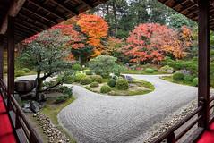 Kyoto Autumn 7843 (kbaranowski) Tags: 2016krzysztofbaranowski krzysztofbaranowski nihon nippon autumn maple japanesemaple fallfoliage colorful nature beautyinnature garden japanesegarden kyoto zengarden