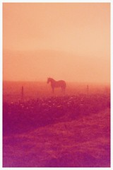 Morning graze (uti504) Tags: cerknica lake slovenia horse animal analog analoug 35mm film praktica mtl3 morning