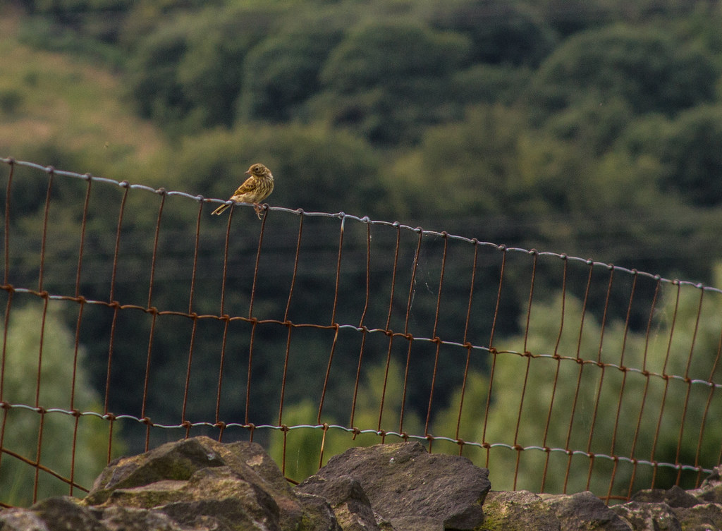 destruction of wildlife and countryside beauty Protected in the uk under the wildlife and countryside act, 1981  sand lizards are confined to a few sites as destruction of their habitat has reduced their range.