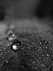 untitled (brescia, italy) (bloodybee) Tags: 365project macro sage herbs leaf dew drops water bw bokeh
