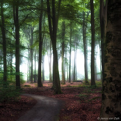 Early morning in the forest ( Jenco van Zalk) Tags: netherlands holland jenco speulderbos sprielderbos beech light nature