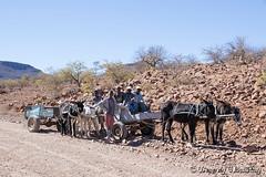 147-Damaraland-002 copy (Beverly Houwing) Tags: africa men desert namibia himba donkeycart damaraland