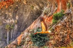 #west_bekaa #hdr #photography #birds (salam.jana) Tags: westbekaa hdr photography birds