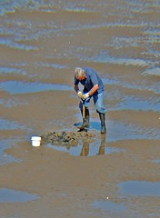 Digging for bait! (Kay Bea Chisholm) Tags: sunshine sand digging worms bait wallasey spade rivermersey egremontpromenade