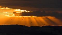 sunset n birds (maikepiel) Tags: sunset sonnenuntergang rays sun sonnenstrahlen clouds wolken sky himmel hills hgel berge birds vgel orange silhouette