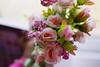 06. florzinha (Le fabuleux destin d'Laura) Tags: flor flower florzinha desafio challenge photography photo photographer pink green sweet cute