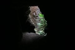 Tombeau phnicien (Pi-F) Tags: liban byblos tombeau puit lumire arbre figuier tunnel contraste vert nature roche texture jbail jbeil