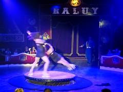 El Circo (12) (calafellvalo) Tags: circocircuscirquezirkusclownspayasosemocionesfantasiamagiacalafelvalo raluy circo zirkus sufrir suspirar fantasa fantasy sigh sueos dreams trume rves circoraluy suspense miedo fear trepidation circus cirque equilibrios payasos clowns trapecistas trapze trapez emociones emotionen emotions passions angst sentimirntos feelings feel affect risas lacht lache laughs mirth merriment magia magie magic calafellvalo art