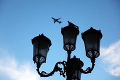 shadows (tolisk9) Tags: thessaloniki θεσσαλονίκη bird sky πουλί ουρανόσ plane αεροπλάνο