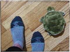 The Race is On (Oh Kaye) Tags: odc partofme feet turtle stuffedtoy socks