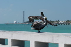 Miami (315) (Umbe alias UmbertinoRulez) Tags: ocean park sea sky holiday west ford love beach me beer rock skyline canon disco happy drive crazy sand little florida you photos coconut fort miami cerveza tacos havana cuba pussy hard dream craft parrot full corona lauderdale everglades groove mustang gt budweiser tow volley burritos nachos tremont caf biscayne ket pezzo umbe dreamevents traveladdicted wwwfacebookcomumbetraveladdicted umbetraveladdicted