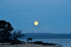 DSC_0021 (RUMTIME) Tags: moon beach nature queensland stradbroke coochie coochiemudlo