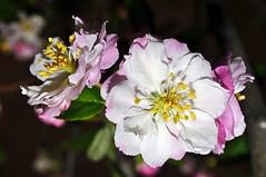2014-10-16 10-08_01 (J Rutkiewicz) Tags: flower flora kwiaty