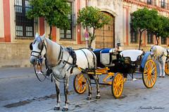Coche de caballos sevillano (alanchanflor) Tags: caballo sevilla andalucía españa coche de caballos naranjos palacio color hdr