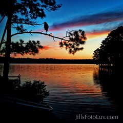 Lovin' me a sunset! (jillsfotoluv) Tags: trees sunset sky bird heron nature water clouds boats outdoors evening dusk wildlife branches silhouettes swiftcreekreservoir