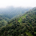 Mashpi Eco Lodge, Andean Cloud Forest, Ecuador.